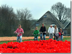 Riding a bicycle through the tulip fields of Holland