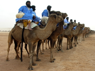 The camel parade at the moussem de Tan-Tan, Morocco.